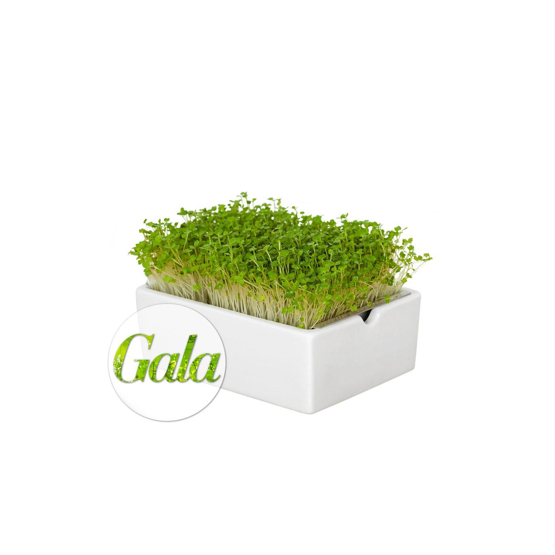 Einfach genießen: Microgreens dürfen ab jetzt in keiner Küche fehlen, denn die grünen Mini-Pflänzchen liefern besonders vieleNährstoffe und sind superpflegeleicht. Perfekt als frisches Topping fürSandwich, Pasta, Salat& Co. Starter-Kit ca. 29 Euro