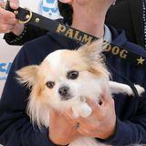 """Dieser kleine Zeitgenosse ist fürseine Rolle im Film """"Dogman"""" in der Kategorie """"Bester Filmhund"""" nominiert."""