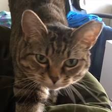 Frage-Antwort-Spiel: Er stellt seiner Katze eine Frage - ihre Reaktion ist super lustig