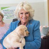 14. Juni 2018  Ganz verliebt in die kleine Labrador Welpin namens Gretel ist Herzogin Camilla.