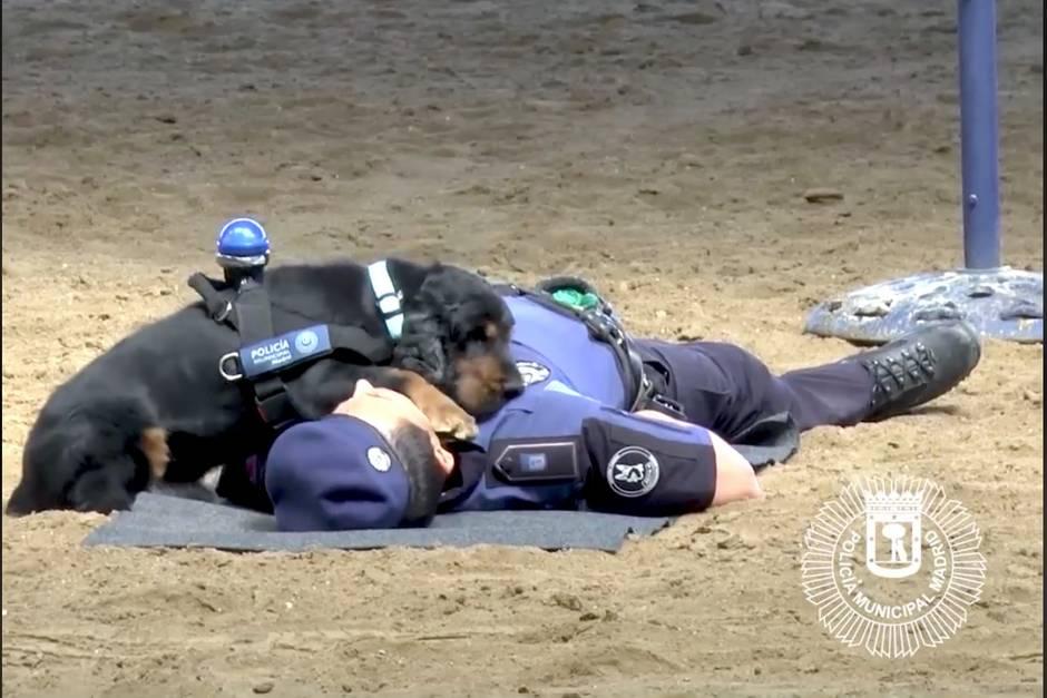 Der Polizeihund Poncho und ein Beamter derPolicía Municipal de Madrid