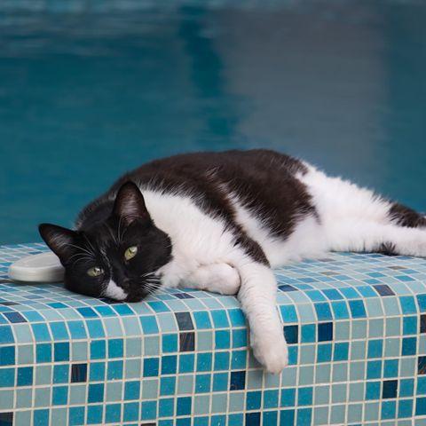 Eine Katze entspannt am Pool.