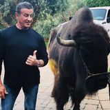 """Sylvester Stallone scherzt zu diesem lustigen Schnappschuss auf Instagram, dass er """"einen sehr großen Hund adoptiert hat, den er Buffalo Wings nennen will""""."""