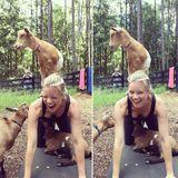 Amy Smart hat sichtbar Spaß beim Ziegenyoga.