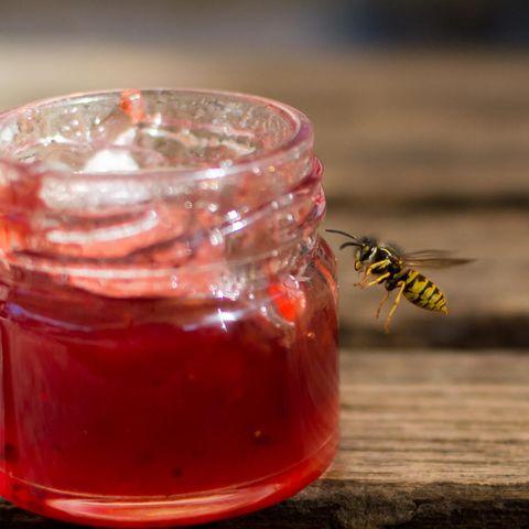 Wespen lieben süße Sauereien.