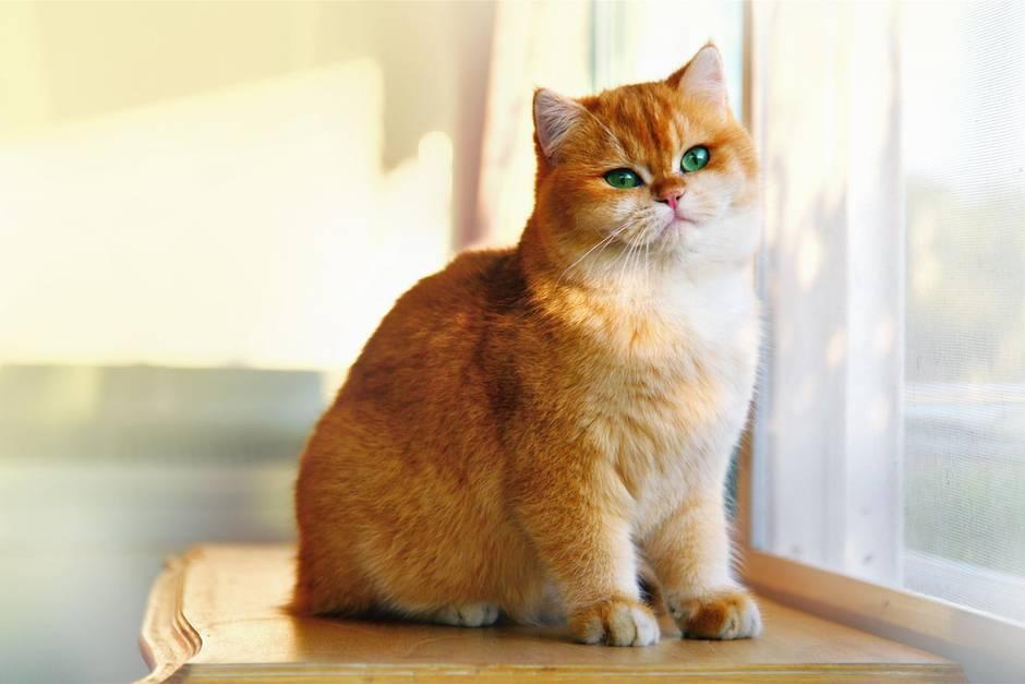 """Kurioser Aufruf: """"Entschuldigung, dürfte ich mir Ihre Katze ausleihen?"""""""