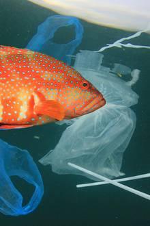 Ein Fisch umringt von Müll.