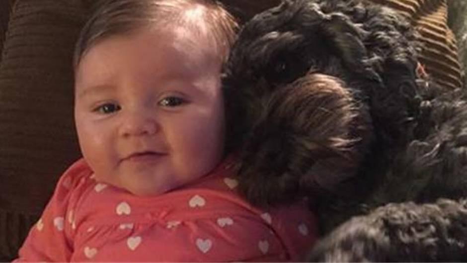 Tragödie: Der Hund konnte das Baby vor dem Feuer retten, aber....