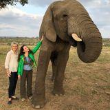 """In Südafrika erlebt Kristin Davis (Mitte) diesen magischen Moment, wie sie selbst beschreibt. Der """"Sex and the City""""-Star lernt die gerettete ElefantendameJabulani kennen."""