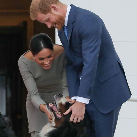 Herzogin Meghan undPrinz Harry streicheln den Hund von Irlands PräsidentenMichael Higgins und dessen EhefrauSabina.