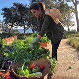 Model Cindy Crawford hat viel Spaß am eigenen Gemüseanbau und ist stolz auf die heimische Ernte.