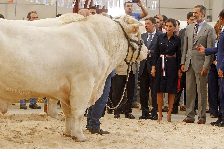 """5. September 2018  Kuh trifft Königin! Ok, es ist eher ein stattlicher Bulle, denKönigin Letizia da begutachtet. Zusammen mit Felipe eröffnet siedie Landwirtschaftsmesse """"SALAMAQ'18"""" im spanischen Salamanca."""