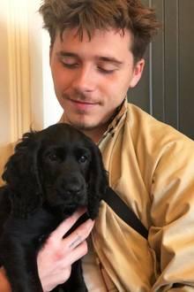 9. September 2018  Wie süß! Brooklyn Beckham hat tierischen Nachwuchs, und der kleine schwarze Wonneproppen hat neben einem unwiderstehlichen Babyhundeblick auch einen schnuckeligen Namen: Fig!