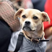 Tierliebe bei der Fashion Week in New York