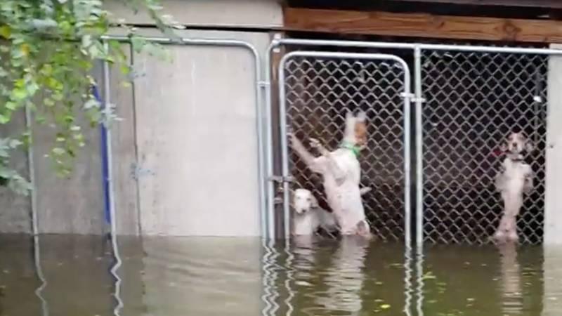 Hurrikan Florence: Diese Hunde hält das Wasser gefangen