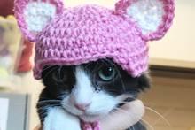 Armes Kätzchen : Hinter der süßen Mütze steckt eine grausame Geschichte