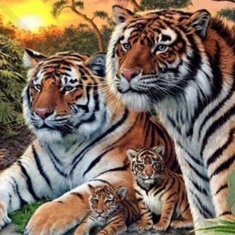 Unglaublicher Fund: Tigerbabys in Plattenbau entdeckt