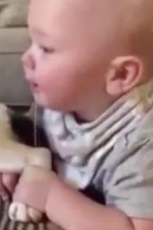 Herzallerliebst: Baby packt Katze an den Hinterbeinen – unglaublich wie das Tier reagiert