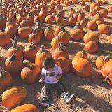 Diesen süßen Schnappschuss von der kleinen Stormi auf einem Kürbisfeldteilt Kylie Jenner mit ihren Instagram-Fans.