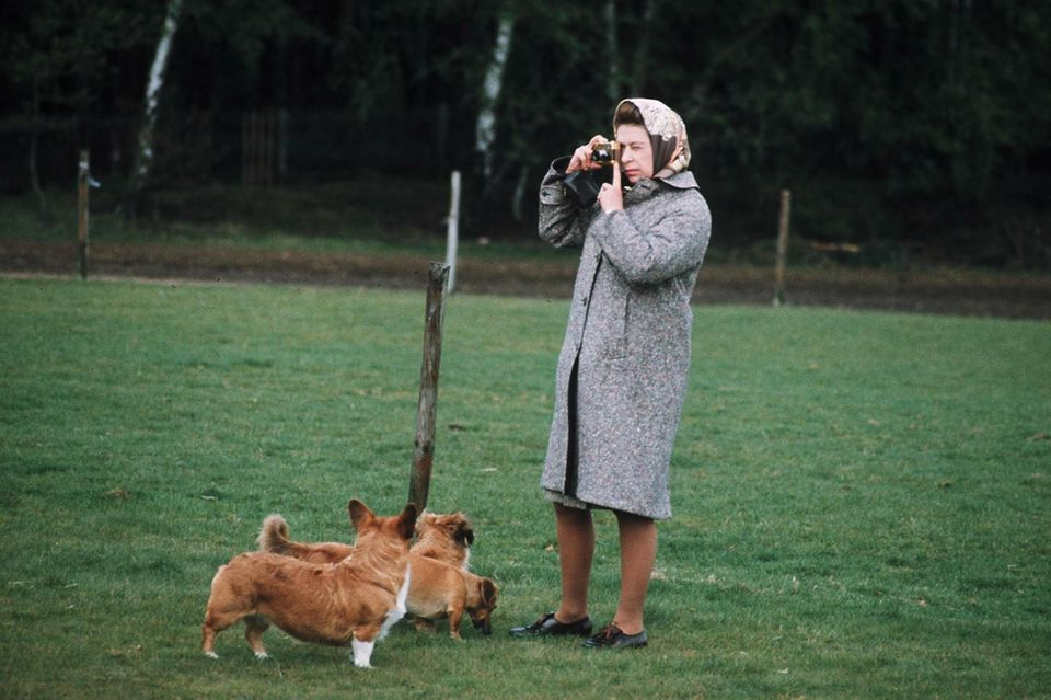 Eine Liebe, die nie vergeht: Queen Elizabeth II.  mit drei ihrer Corgis im britischen Windsor Great Park in den 60er Jahren