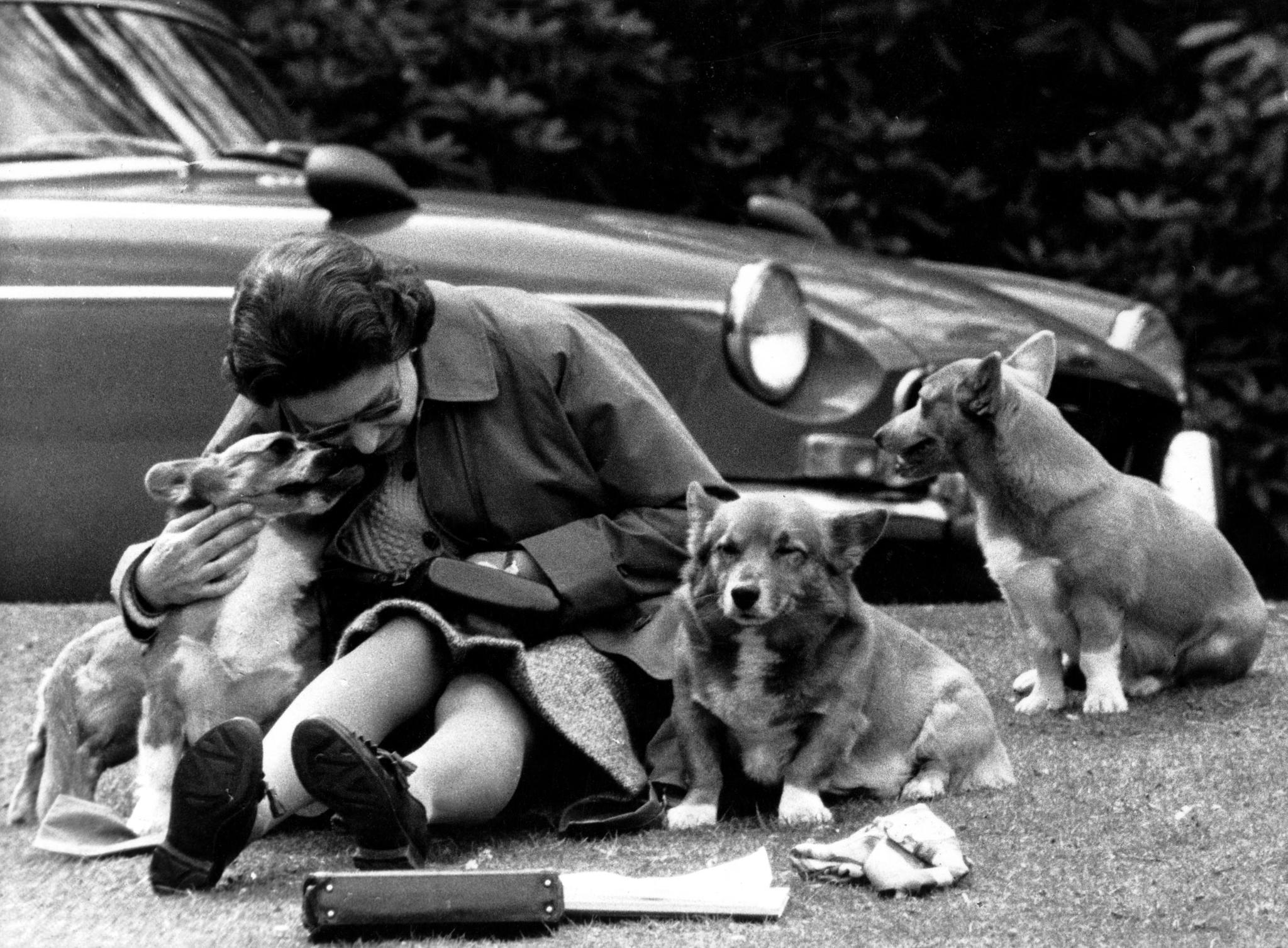 Sie waren stets mit dabei: Hier kuschelt Queen Elizabeth II. mit ihren Corgis während der Royal Windsor Pferdeshow 1973