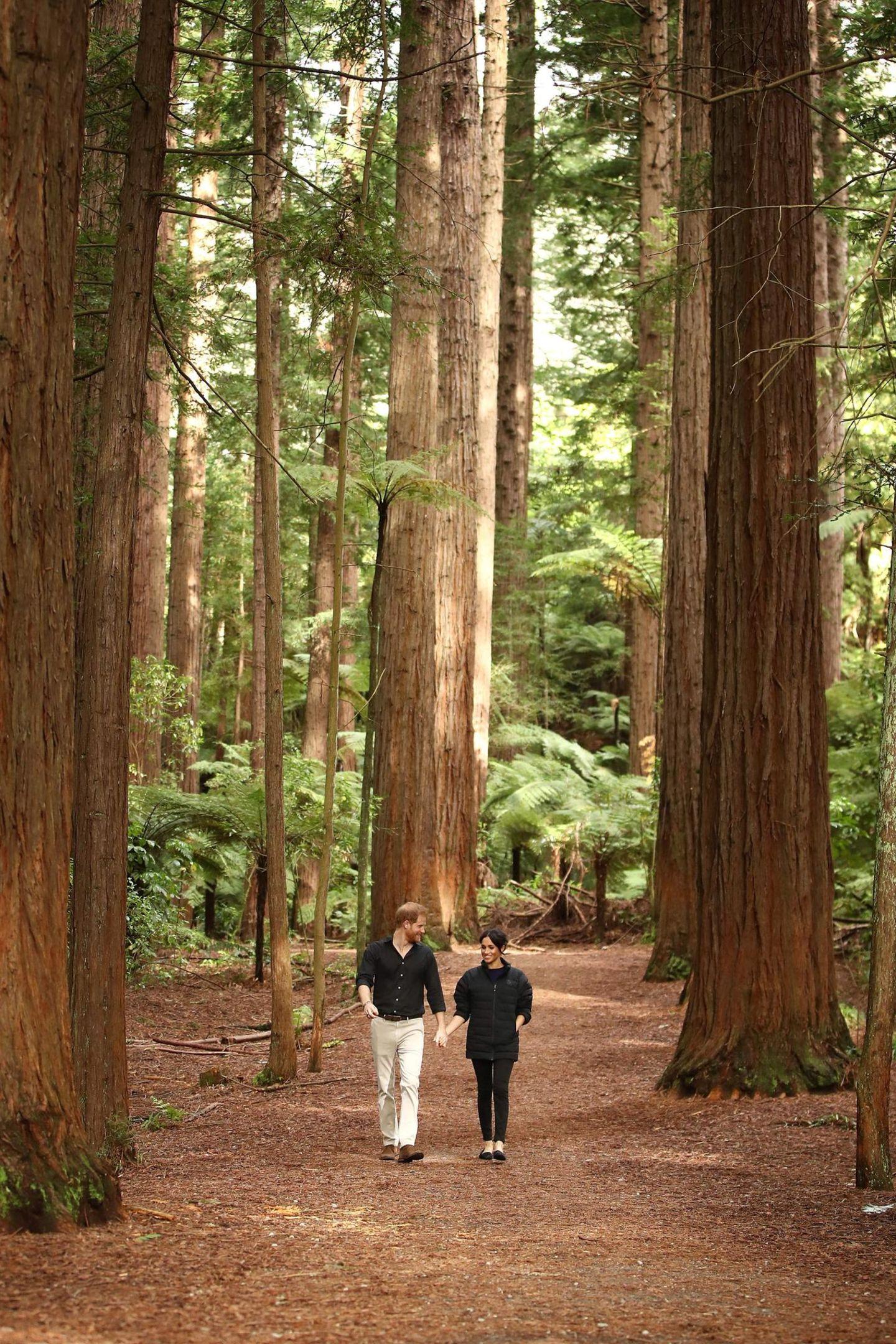 Tag 15  ... Harry und Meghan wirken winzig zwischen den Baumriesen.