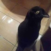 Vogel oder Katze?