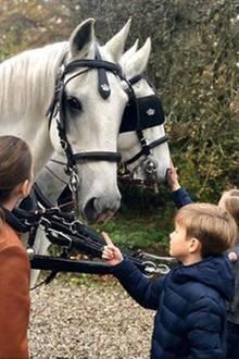 4. November 2018   Drei kleine Pferdenarren: Prinzessin Josephine, Brüderchen Prinz Vincent und Schwesterchen Prinzessin Isabella freunden sich mit den Pferden an.