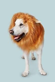 "Tessas Hund Nelson mag das vegane Hundefutter von ""VEGDOG"""