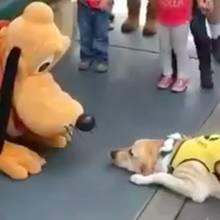Disneyland: Wie dieser Hund in Disneyland auf Pluto reagiert, ist herzerwärmend