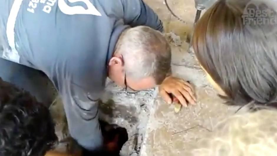 Unglaublich: Familie hört Geräusche unter der Terrasse - was sie findet, schockiert