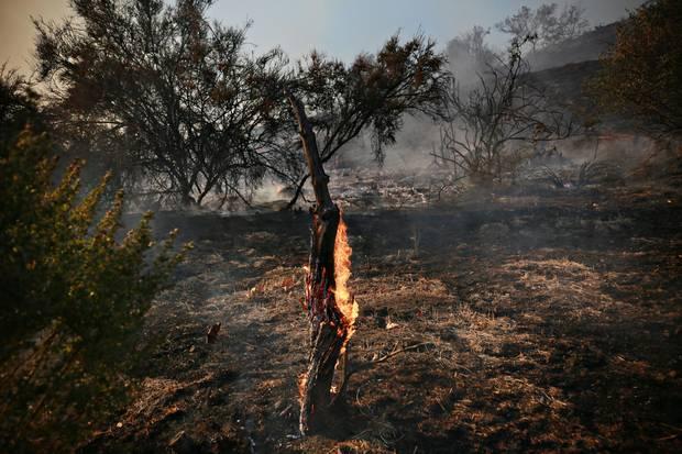 Durch die verheerenden Waldbränden in Kalifonien sind noch weitere Topstars obdachlos geworden.
