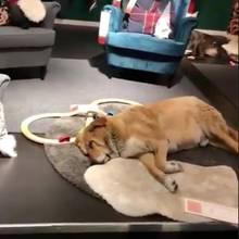 Hund bei Ikea