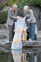 19. November 2018  Kaiserin Michiko und Kaiser Akihito lassen dieKoi Karpfen in einen Teich im Ninomaru-Garten im Kaiserpalast in Tokio frei.