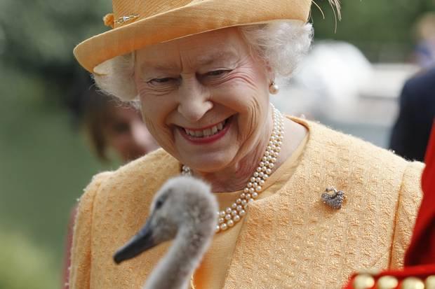Queen Elizabeth freut sich über ein Schwanenküken.