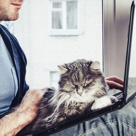 Die Katze hat auf dem Laptop ihres Besitzers Platz genommen