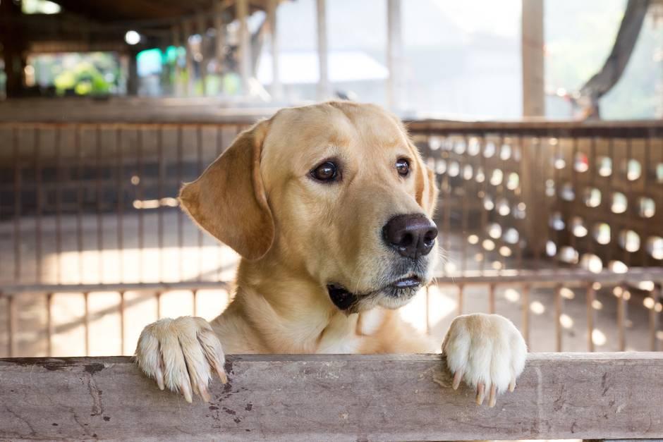 Glücklich sieht dieser Hund keineswegs aus - ob er Hunger hat?!