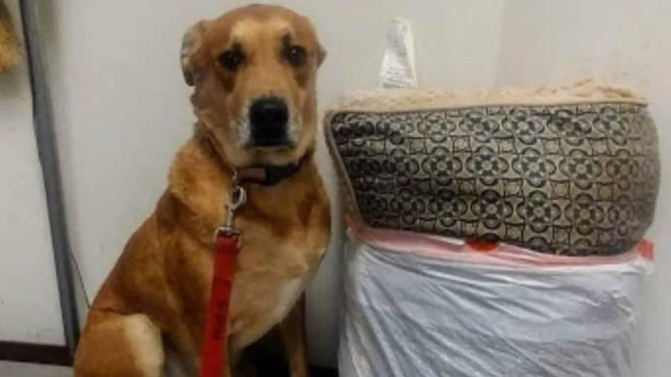Happyend nach traurigem Schicksal: So fand dieser Hund endlich ein neues Zuhause