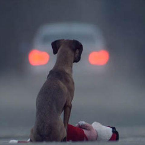 Ente & Hund oder Eule & Katze: Das sind die tierisch süßesten Freundschaften der Welt