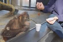 Zauberei: So goldig freut sich dieser Orang-Utan über einen Zaubertrick