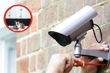 Unglaubliche Erkenntnis: Kamera zeichnet auf, was Hund tagsüber ohne Herrchen macht
