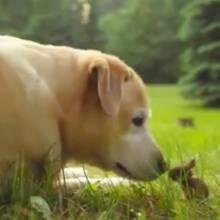 Best Buddies: Hund und winziges Kaninchen sind nicht mehr zu trennen