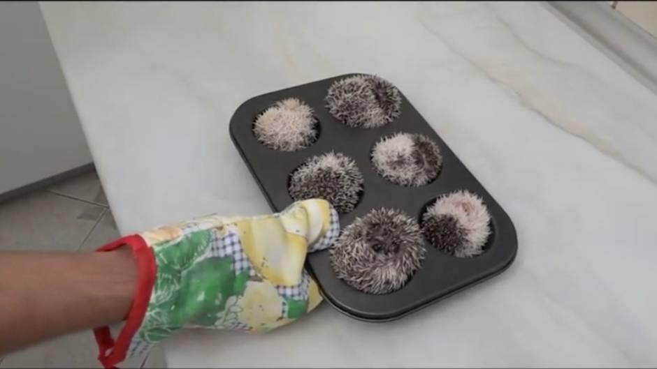 Hingucker: Die wahrscheinlich süßesten Muffins der Welt