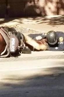 Texas: So herzzerreißend nimmt dieser Polizist Abschied von seinem Pferd