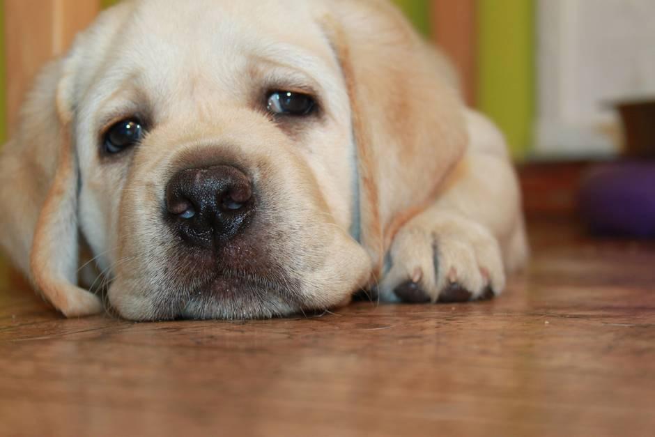Hunde: treue Gefährten des Menschen