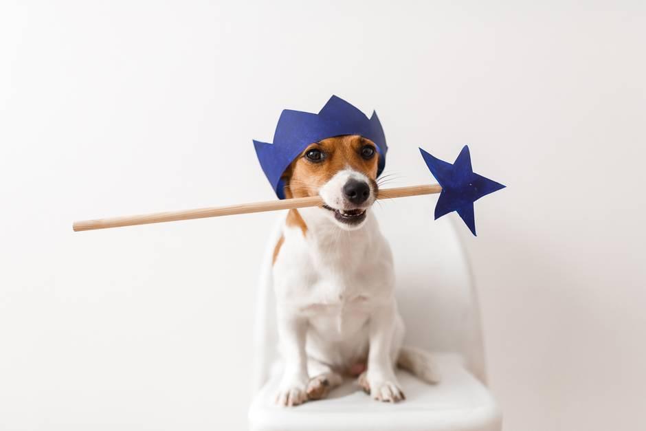 Hund mit Zauberstab und Krone