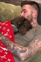 12.Januar 2019  Olive, der Familienhund der Beckhams hält gerne mal ein Nachmittagsschläfchen mit Papa David. Und das natürlich standesgemäß warm eingekuschelt in eine Designer-Decke von Louis Vuitton. Wer hat, der hat!