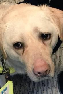 Das regt uns auf: Rücksichtsloser Umgang mit Mann und seinem Blindenhund