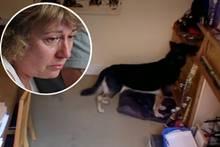 Alleine zuhause: Das Verhalten dieses Hundes treibt den Besitzern Tränen in die Augen