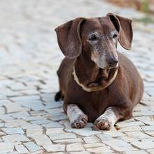 Hunde gelten nicht umsonst als besteFreunde der Menschen